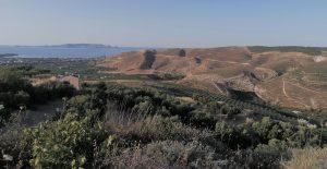 Kreta alyvuogiu aliejus Evergetikon